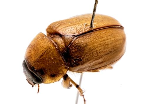 BeetleTest-8236-Sm