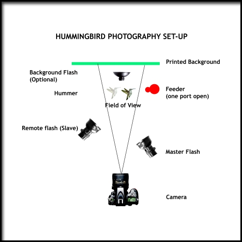 Hummingbird Photo Set-up