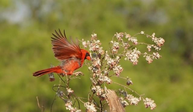 cardinal landing- Cathey